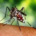 Em SP, 28 municípios estão em alerta de surto de dengue, chikungunya e zika