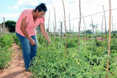 Ppais beneficia milhares de agricultores familiares em São Paulo