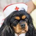 Pets podem diminuir a depressão e prevenir hipertensão