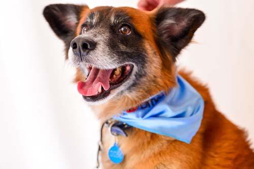 Cães também devem prevenir câncer de próstata no Novembro Azul