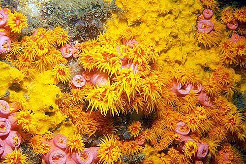 Expedição da WWF-Brasil ajuda a conservar o arquipélago de Alcatrazes