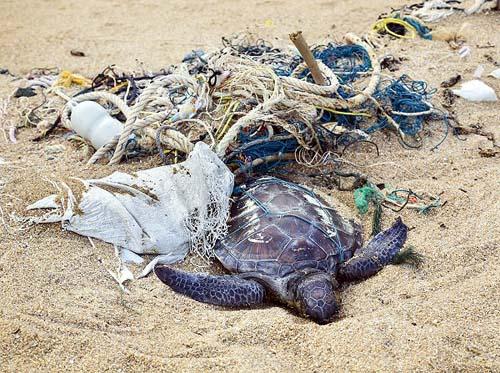 Lixo já matou mais de mil tartarugas no litoral Norte de SP