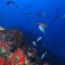 Explicando a origem da vida marinha ao redor de ilhas isoladas