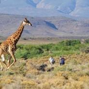 Safari na África do Sul!