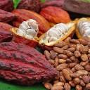Brasil sediará em 2018 a reunião mundial da World Cocoa Foundation