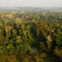 Conservação focada somente em carbono pode desproteger a biodiversidade