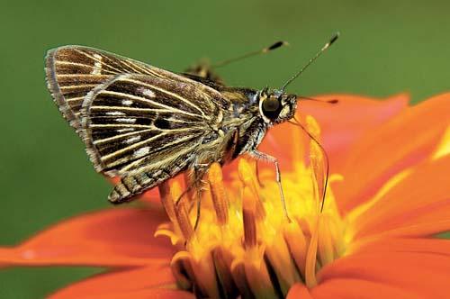 Exposição mostra insetos na natureza