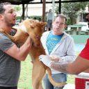 Imunização de cães e gatos em Santos atinge 68% da meta