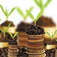 Sustentabilidade atrai pequenos negócios