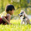 Dicas para melhorar a relação das crianças com os pets