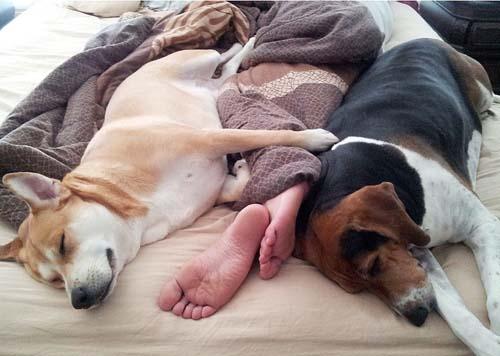 Cuidados para dormir com seu pet e manter a qualidade do sono