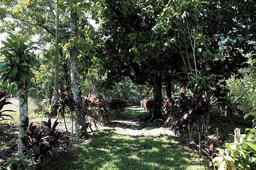 Opção de turismo na Área Continental de Santos