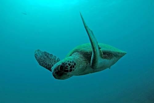 Projetos de biodiversidade marinha apresentam espécies ameaçadas