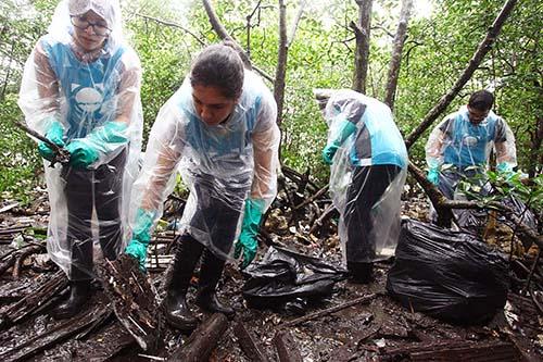 Santos lança editais para limpeza de mangues, praias e rios