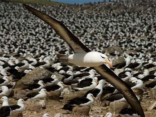 Dia Mundial do Albatroz chama atenção para a crise de conservação da espécie
