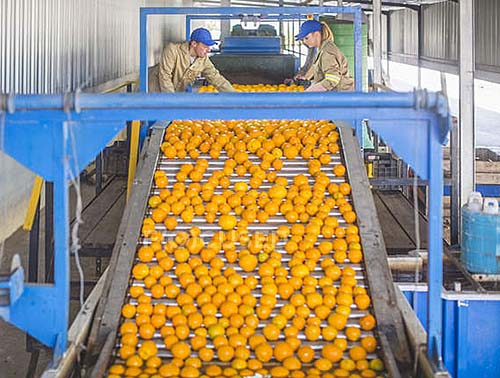 Brasil perde para o México a liderança nas exportações de suco de laranja